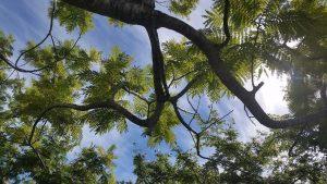 Trees toward sky